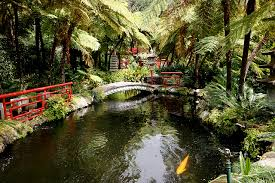 tropical garden landscaping ideas 21 wonderful tropical garden