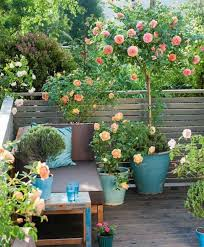 small rose garden growing roses in containers balcony patio