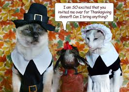 happy thanksgiving kittehs from mousebreath mousebreath