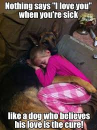 Sick Puppy Meme - new 114 best puppy memes images on pinterest wallpaper site