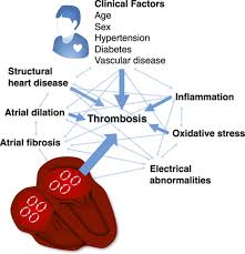 novel risk markers and risk assessments for cardiovascular disease