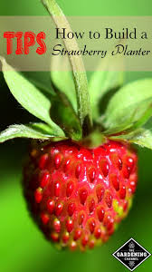 Diy Strawberry Planter by How To Build A Strawberry Planter Tips And Plans Gardening Channel