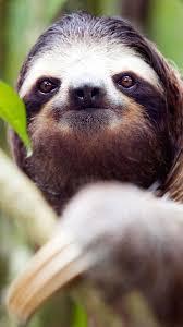 busch gardens harry the sloth