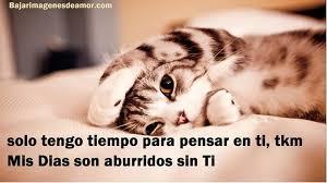 imagenes de gatitos sin frases gatitos lindos con frases bonitas de amor para descargar gratis