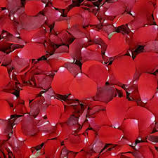 Rose Petals Dried Red Rose Petals Manufacturers Suppliers U0026 Wholesalers