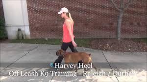 boxer dog training tips 1yo boxer