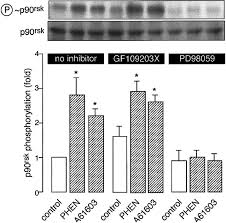 roles of mitogen activated protein kinases and protein kinase c in
