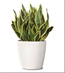 low light houseplants plants that don t require much light 10 easy care houseplants green thumb pinterest houseplants
