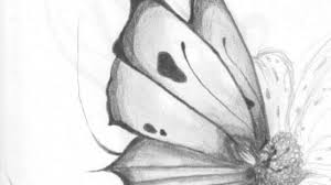 pencil drawings of flowers and butterflies drawing pencil