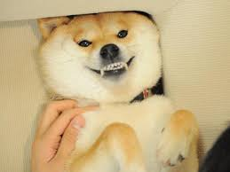 Doge Know Your Meme - such angry doge know your meme