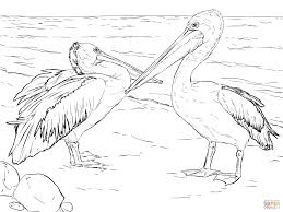 australian pelicans coloring page free printable coloring pages