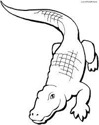 Coloriage Crocodile maternelle dessin gratuit à imprimer