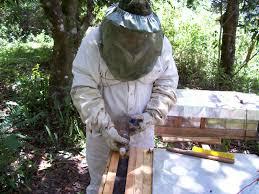 musings on beekeeping more musings about beekeeping with