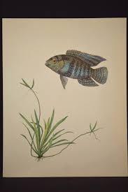 tropical fish wall art decor aquarium fish print aquatic plant