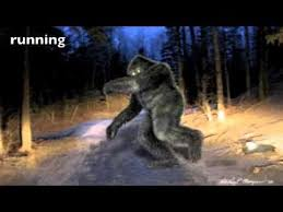 bigfoot physiology and morphology via witness sketches youtube