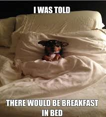 Dog In Bed Meme - breakfast in bed meme slapcaption com group chihuahuas