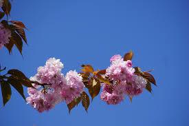 free images nature branch plant sky leaf flower petal