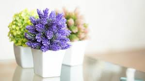 decor indoor flowering ideas with white pots and beautiful indoor