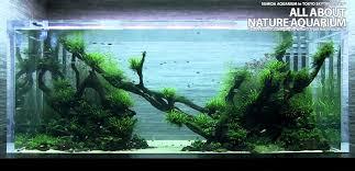 japanese aquascape dutch vs natural aquariums
