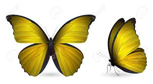 set of colorful butterflies front and side view royalty free