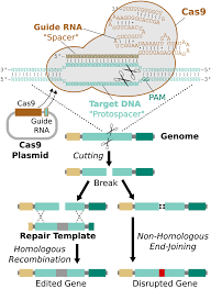 emerging technology concerning rna guided gene drives for the