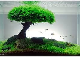 membuat aquascape bening f tank info dan tips aquascape