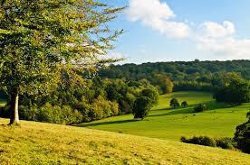 sky forest tree meadow grass slope cow hd wallpaper
