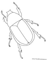 Coloriage Insecte facile dessin gratuit à imprimer