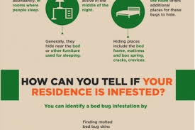 how can you get rid of bed bugs bed bugs infographics visual ly