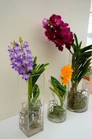vanda orchid joinflower tropical vanda orchid plants from joinflower co