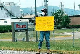 Monsanto Vanity Fair Toxic Knowledge A Review Of Baptized In Pcbs Southern Spaces