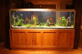 Aquarium Design By Teddys Tanks - Home aquarium designs