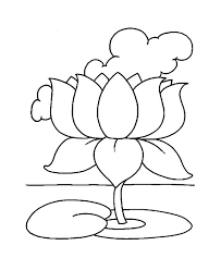 drawn lotus national flower pencil and in color drawn lotus