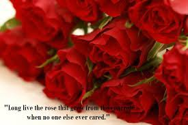 Flower And Love Quotes - latest most beautiful red rose pictures with romantic love quotes