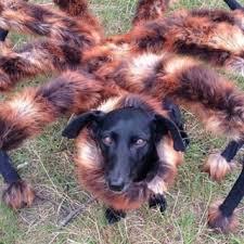 Spider Dog Halloween Costume Tag Spider Dog Costume 2015 Litle Pups