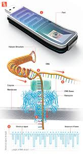 363 best genetics images on pinterest genetics ap biology