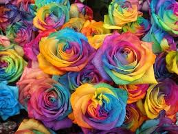 Colorful Roses 97 Best Rainbow Roses Images On Pinterest Rainbow Colors