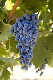 types of red colors best 25 types of red wine ideas on pinterest different types of