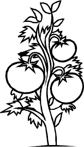 black and white plants free download clip art free clip art