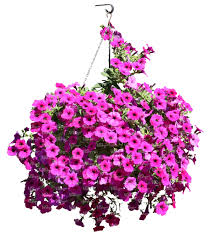 hanging basket with pink flowers cut out trees and plants