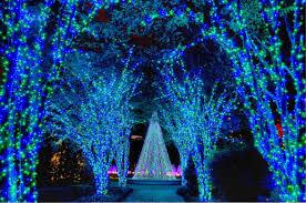 light show in atlanta beautiful blue lights at the atlanta botanical gardens hgtvgardens