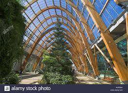 winter gardens interior sheffield city centre sheffield south