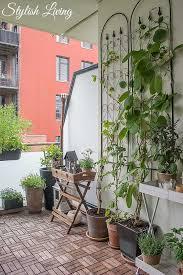 kletterpflanzen fã r balkon balkonbegrünung und kletterpflanzen die jede wand öser