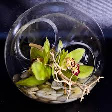 wholesale flowers and supplies glass sphere crosswinds vase small wholesale flowers and supplies