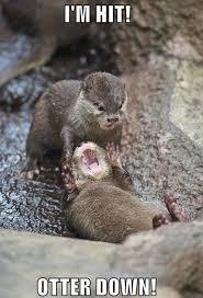 Animal Meme - i am hit otter down funny animal meme