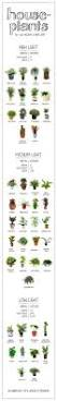 11 easy to grow houseplants houseplant houseplants and plants