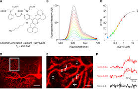 caruby nano a novel high affinity calcium probe for dual color