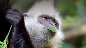 monkey san diego zoo animals u0026 plants