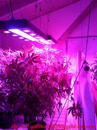 indoor garden led grow lights gardening ideas