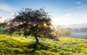 trees for organic gardens